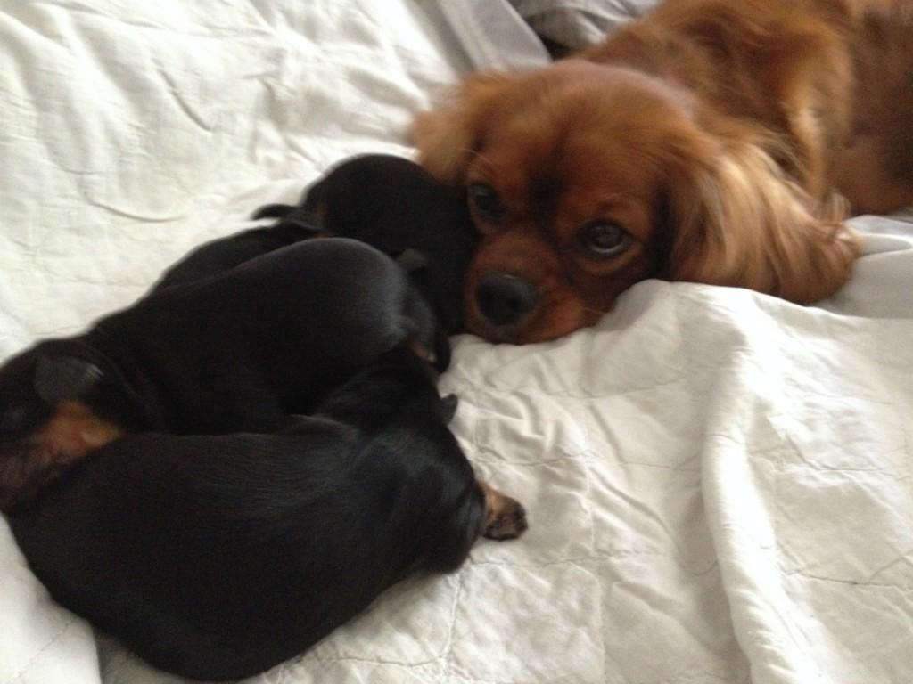 Man skal vel holde øje med de små i mors seng, imens mor gør fødekassen ren...